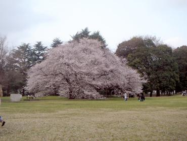 hanami201004-1.jpg