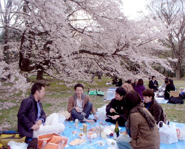 hanami201004-2.jpg